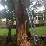 Crosscut Treework storm damaged tree