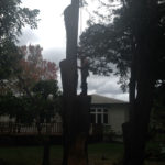 Crosscut Treework storm damaged trees