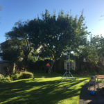 Tree pruning and reduction