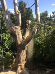 This large eucalyptus was safely removed using rigging techniques for tree felling by Crosscut Treework